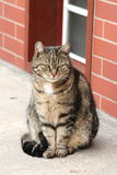 Gato gris Fotografía de archivo