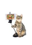 Gato gris Imagen de archivo libre de regalías