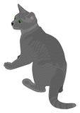 Gato gris alerta Imagenes de archivo