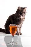 Gato gris con bocal Imagen de archivo