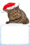 Gato gris con la muestra. Foto de archivo