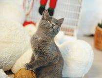 Gato gris de la felpa en un interior del ` s del Año Nuevo con el oso del juguete Fotos de archivo libres de regalías