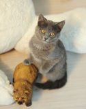 Gato gris de la felpa en un interior del ` s del Año Nuevo con el oso del juguete Fotos de archivo