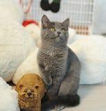 Gato gris de la felpa en un interior del ` s del Año Nuevo con el oso del juguete Foto de archivo libre de regalías