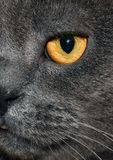 gato gris de la postal fotografía de archivo libre de regalías
