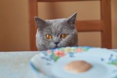 Gato gris divertido que se sienta en la tabla fotografía de archivo