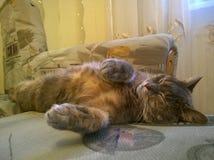 Gato gris el dormir Foto de archivo