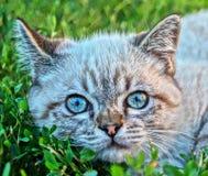 Gato gris en el jardín Fotos de archivo libres de regalías
