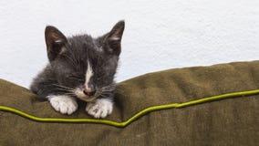 Gato gris en el sofá fotos de archivo