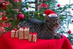 Gato gris en el sombrero 2017 de la Navidad Imágenes de archivo libres de regalías
