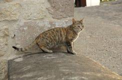 Gato gris en un umbral de piedra Foto de archivo