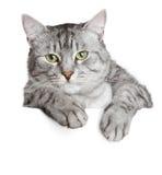 Gato gris en una bandera Imagen de archivo libre de regalías
