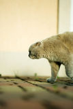 Gato gris lindo nacional foto de archivo