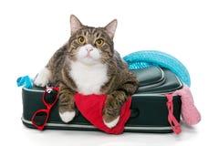 Gato gris puesto en una maleta Fotos de archivo