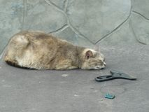 Gato gris que duerme en la tabla fotos de archivo