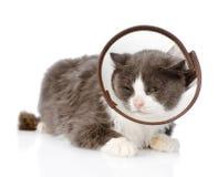 Gato gris que lleva un cuello del embudo Aislado en el fondo blanco Fotos de archivo libres de regalías