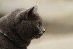 Gato gris que localiza al aire libre el tiempo frío foto de archivo