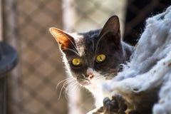 Gato gris que se sienta en el sol como fondo Imágenes de archivo libres de regalías