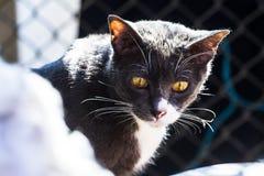 Gato gris que se sienta en la luz del sol que como el fondo Foto de archivo libre de regalías