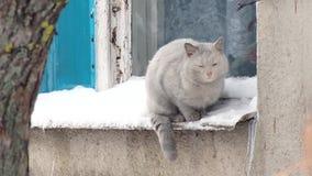 Gato gris que se sienta en la repisa afuera Día de invierno, nieve, ventana metrajes