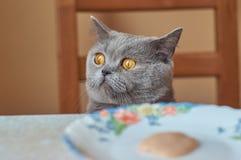 Gato gris que se sienta en la tabla imagen de archivo libre de regalías