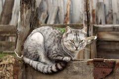 Gato gris que se sienta en una cerca gris imágenes de archivo libres de regalías