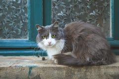 Gato gris que se sienta en una pequeña repisa cerca de la ventana fotografía de archivo