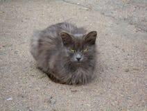 Gato gris sin hogar con los ojos amarillos Fotografía de archivo libre de regalías
