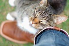 Frotamiento del gato de Tabby contra dueño cariñosamente imagen de archivo libre de regalías
