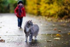 Gato gris y un niño el día del otoño Imagenes de archivo