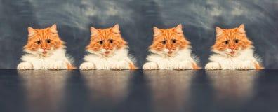Gato grosero encendido Foto de archivo libre de regalías