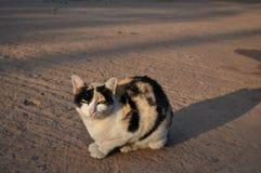 Gato gruñón foto de archivo
