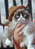 Gato gruñón Fotos de archivo