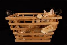 Gato gruñón de la cesta Fotos de archivo