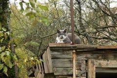 Gato gruñón en el tejado Imagen de archivo