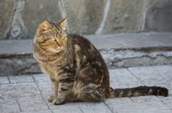 Gato guardado de la ciudad Foto de archivo libre de regalías