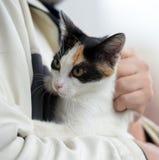 Gato guardado a mano foto de archivo libre de regalías