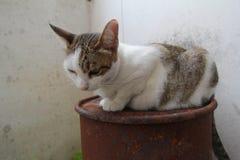 Gato híbrido Foto de Stock