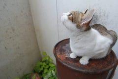 Gato híbrido Imagens de Stock Royalty Free