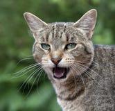 Gato hablador foto de archivo libre de regalías