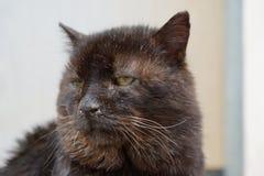 Gato herido necesitando el tratamiento Imagen de archivo