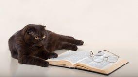 Gato hermoso Foto de archivo