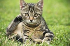 Gato hermoso Imagen de archivo