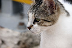 Gato hermoso Fotografía de archivo libre de regalías