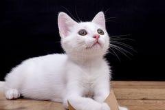 Gato hermoso aislado en blanco imagenes de archivo