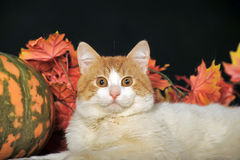 Gato hermoso con la calabaza y el follaje del otoño Fotografía de archivo