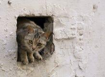 Gato hermoso de la yarda Foto de archivo