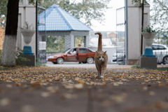 Gato hermoso del jengibre en el parque Imagen de archivo