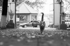 Gato hermoso del jengibre en el parque Fotos de archivo libres de regalías