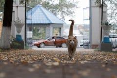 Gato hermoso del jengibre en el parque Foto de archivo libre de regalías
